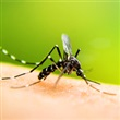 West Nile virus - Thumbnail